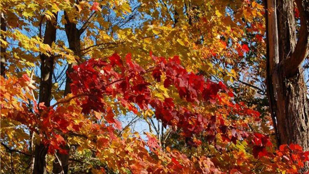 ohio department of natural resources releases fall foliage report wsyx
