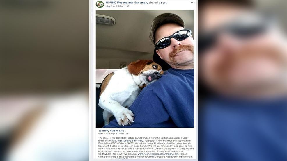 Photo of thankful dog rescued from euthanasia list goes viral | WSYX