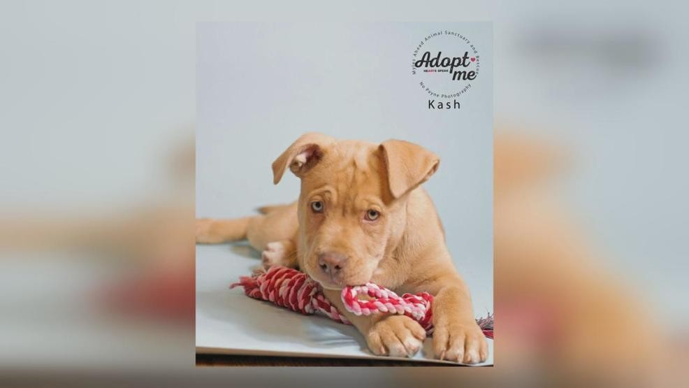 12 Week Old Puppy That Was Revived By Narcan Up For Adoption Wsyx